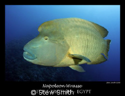 large napoleon wrasse - 10-17mm tokina. by Stew Smith 